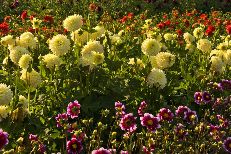 colorful flowers outside