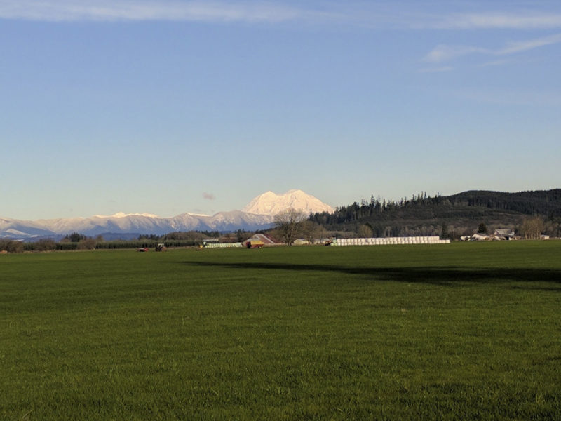 Green fields with white mountains in distance